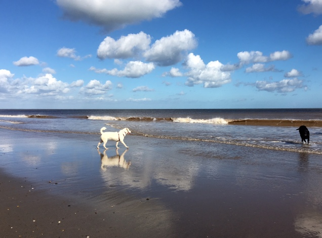Luna Riley beach