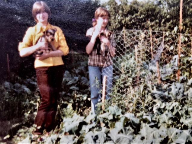 veg garden on the land