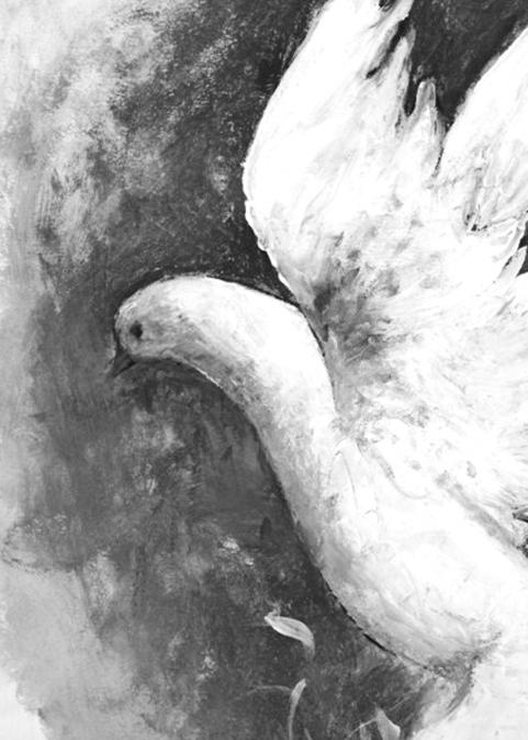 dove (2)b&w a